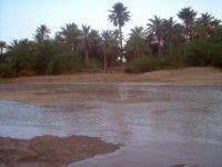 2006_kori05