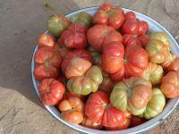 2015_tomate